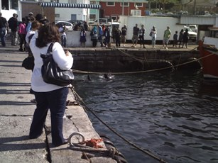 Tourists watching seals being fed in Kalk Bay Harbour